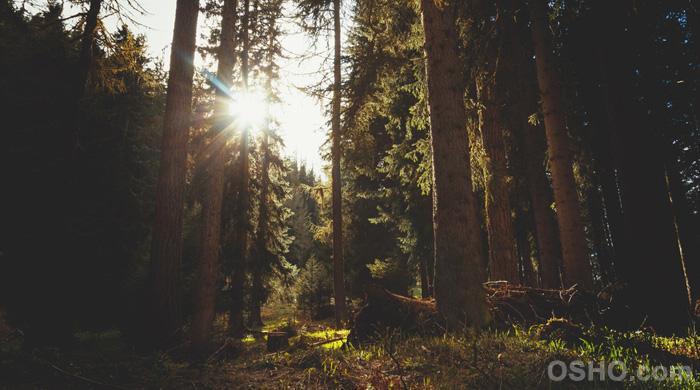 正念(Mindfulness)-進入放鬆的覺知之門