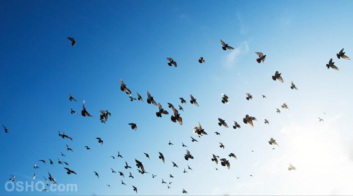 Para volar son necesarias dos alas