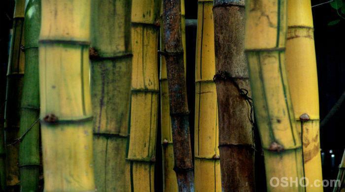Sei wie ein hohler Bambus
