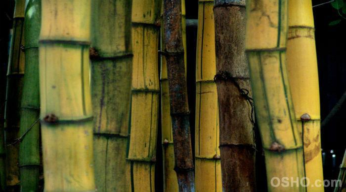 Будьте, как полый бамбук
