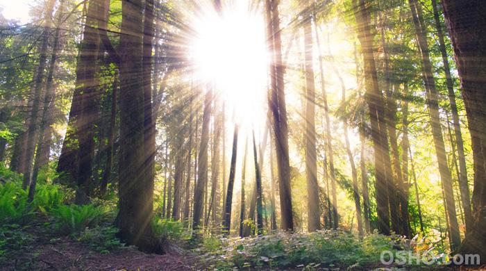 Zitate Von Osho über Bewusstheit
